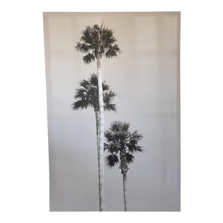 Black & White Palm Tree Print