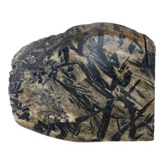 Primitive Fossil Stone Specimen