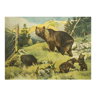 Antique Bear School Poster by Franz Roubal for Leipziger Schulbildverlag, 1930s