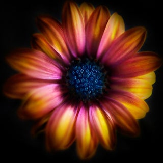 Contemporary Color Wheel Daisy Photography