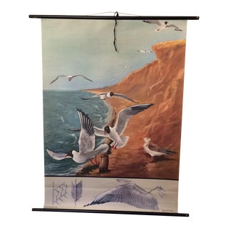 The Black Headed Gull German School Chart