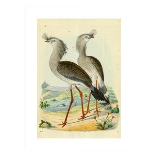Antique '2 Silly Cranes' Archival Print
