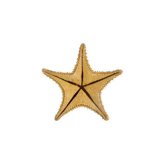 Vintage Nautical Starfish - Image 3 of 4
