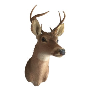 Deer Bust With Antlers