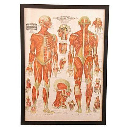Framed Antique Medical Chart - Image 1 of 6