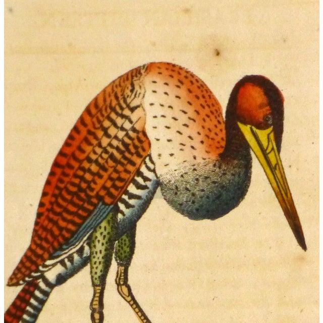Antique Bird Print Engraving, Bittern, 1798 - Image 2 of 4