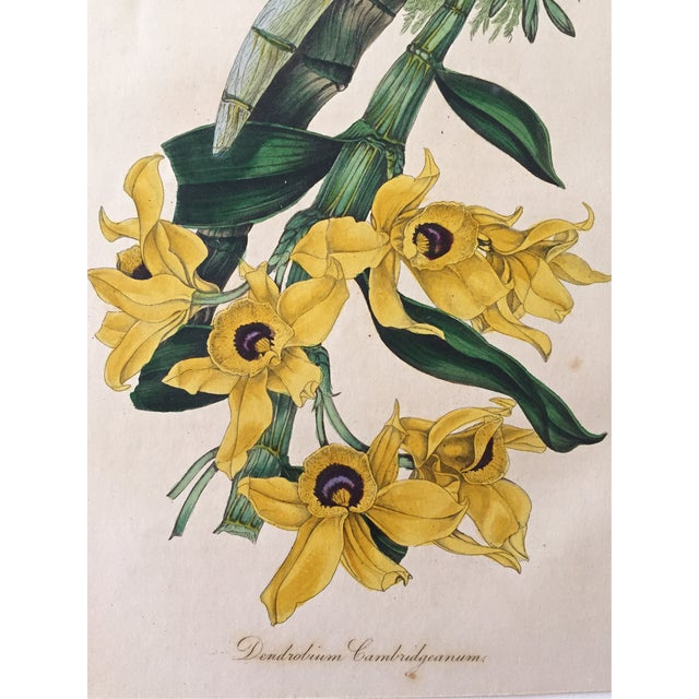 Antique Orchid Flowers 19th Century Lithograph - Image 2 of 3