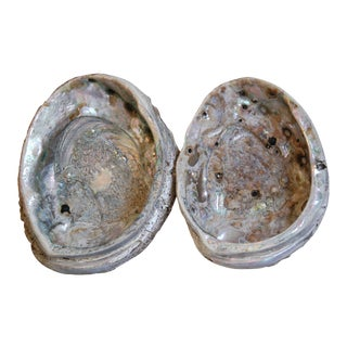 Natural Iridescent Abalone Seashells - a Pair