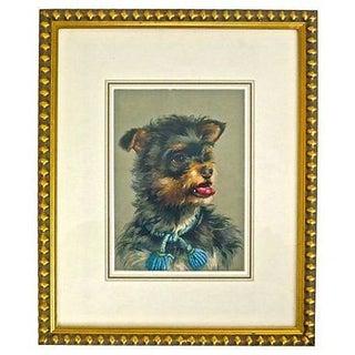 Vintage Framed Terrier Dog Engraving