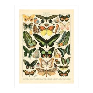 Antique Papillons Archival Print