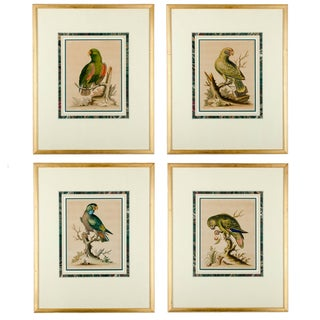 Antique Parrot Engravings by George Edwards - S/4