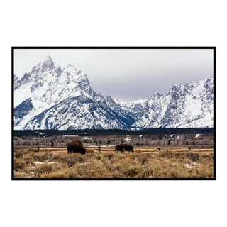 Buffalo in the Tetons Original Framed Photograph