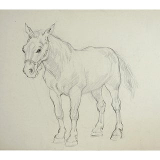 Pencil Study of Work Horse