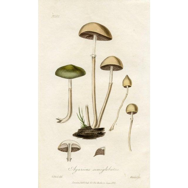 Image of 1830 Antique Mushroom Engraving