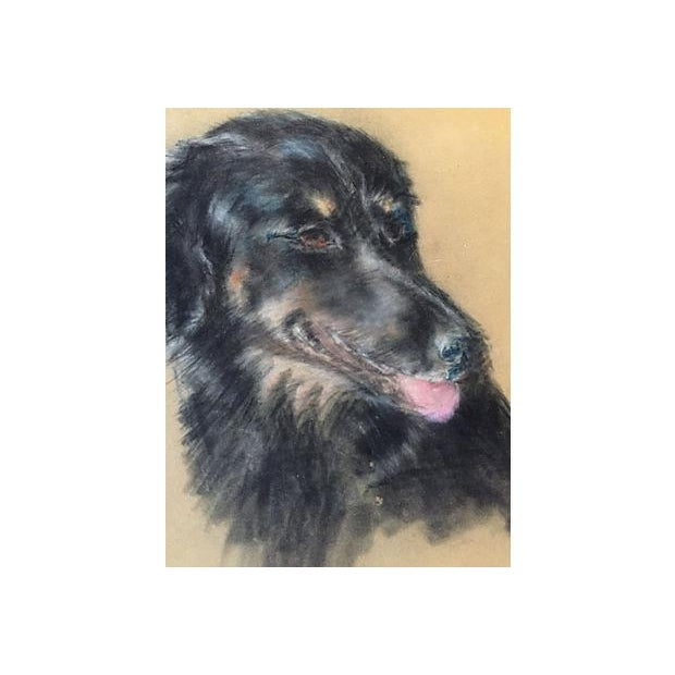 Mid Century Vintage Portait of a Dog in Pastel - Image 4 of 4