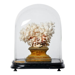 Display Cloche with Coral