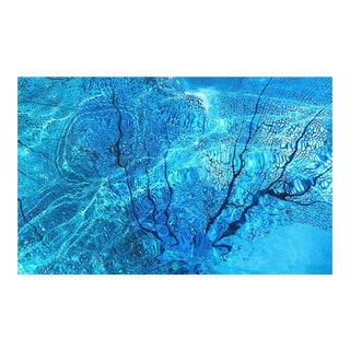 'Caribbean Blue Sea Fan' Photograph