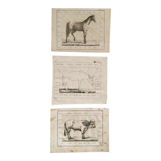 Antique Horse, Mule, Cow Framable Prints - Set of 3