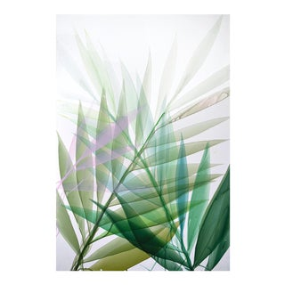 Limited Edition Print 'Tropical Study'