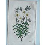 Image of Antique Botanical Engravings - Set of 3