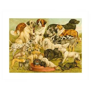 Antique 'Dog Breeds 2' Archival Print