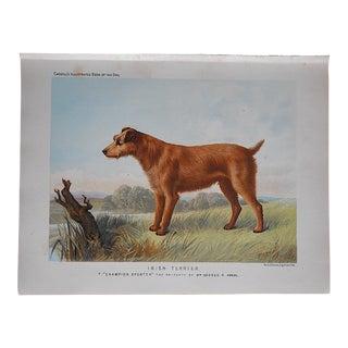 Antique Dog Lithograph - Irish Terrier