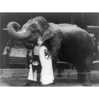 Early 20th-C. Elephant Woman Circus Photography
