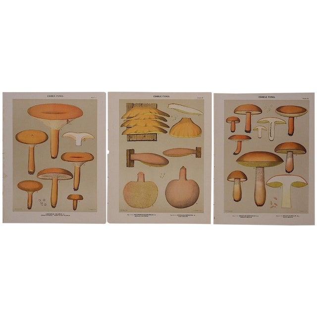 Antique Mushroom Lithograph Prints- Set of 3 - Image 2 of 5