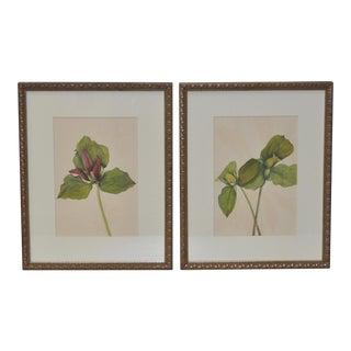 19th Century Botanical Prints - Pair