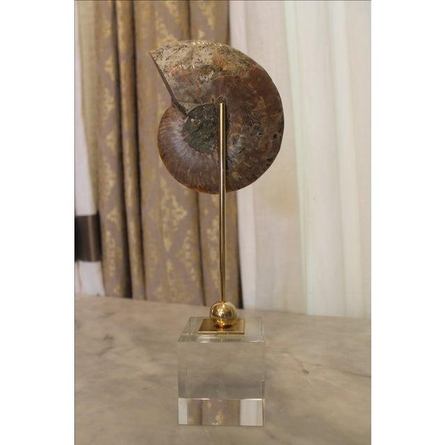 Natural Ammonite on Acrylic Base - Image 6 of 7