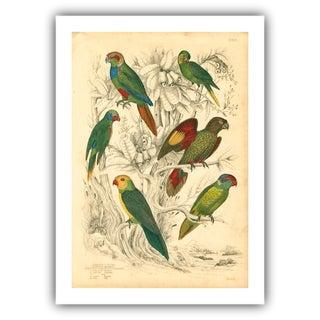 Vintage Parakeets Archival Print