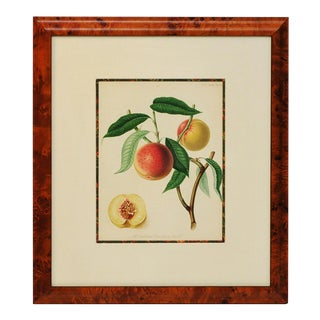 Exquisite 1820 English Fruit Lithograph