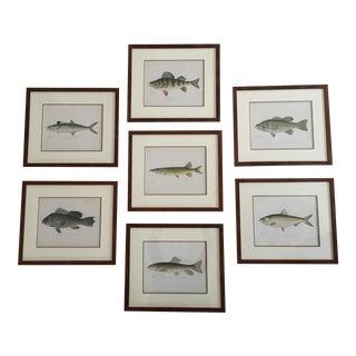 Framed Antique Denton Fish Prints - Set of 7