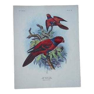 Antique Parrot Lithograph-Hand Colored-The Insular Lori-3/4 Size
