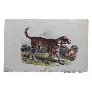 Antique English Mastiff Engraving