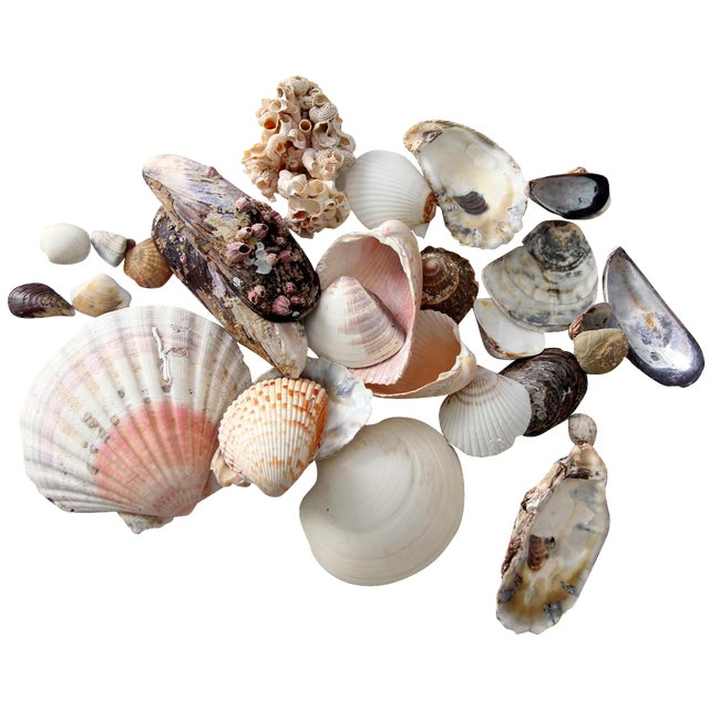 Vintage Sea Shell Collection - Set of 25 - Image 1 of 6