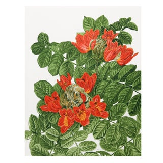 Marion Sheehan - African Tulip Tree Lithograph