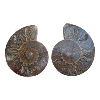 Split Polished Ammonite Fossil - A Pair