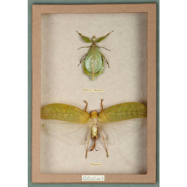 Sarreid LTD Moth Shadow Box - Image 2 of 3