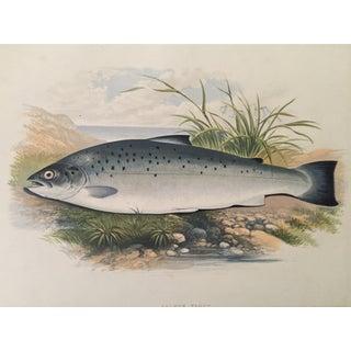 1879 Houghton's London Salmon Trout Lithograph
