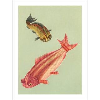 Vintage 'Goldfish' Archival Print