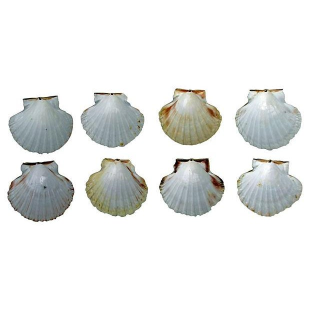 Image of Natural Pink-Hued Shell Serving Dishes - Set of 8