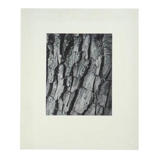"Modernist ""Tree Bark"" Photograph"