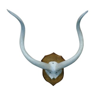 Kudu Skull Plate with Inner Bone Horns
