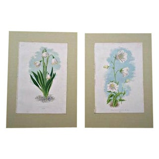 Antique Botanical Prints - A Pair