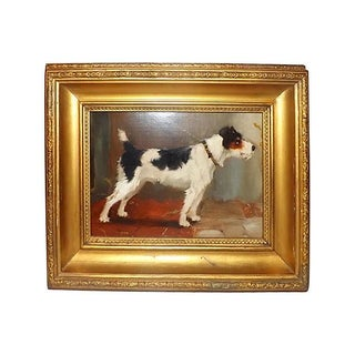 English Jack Russell Terrier Portrait