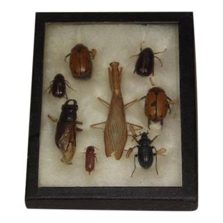 1940's Bug Taxidermy Display