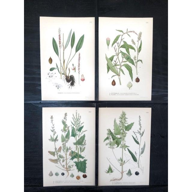 Image of Swedish Floral Prints - Set of 4