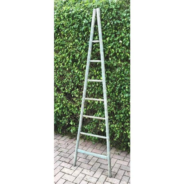 Image of Vintage 1950s Orchard Ladder