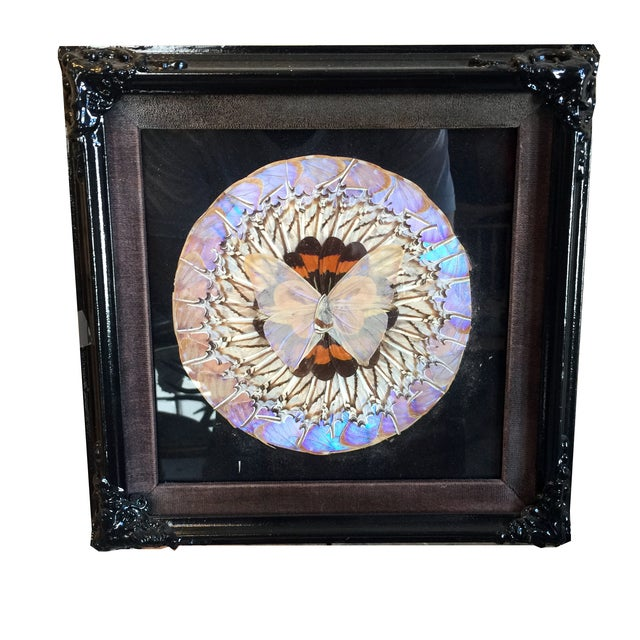 Victorian Butterfly Framed Under Glass - Image 1 of 3